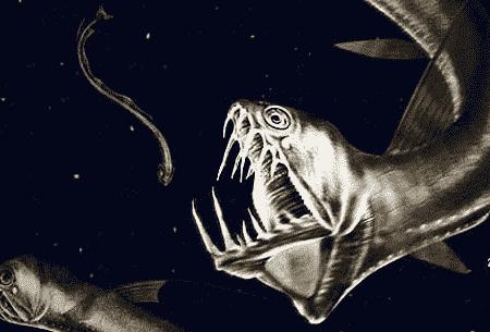 深海 恐怖 画像